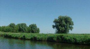 waterkant_biesbosch