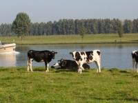 2014-varende-boot-en-koeien